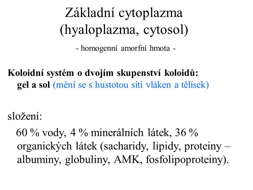 Základní cytoplazma (hyaloplazma, cytosol) - homogenní amorfní hmota -