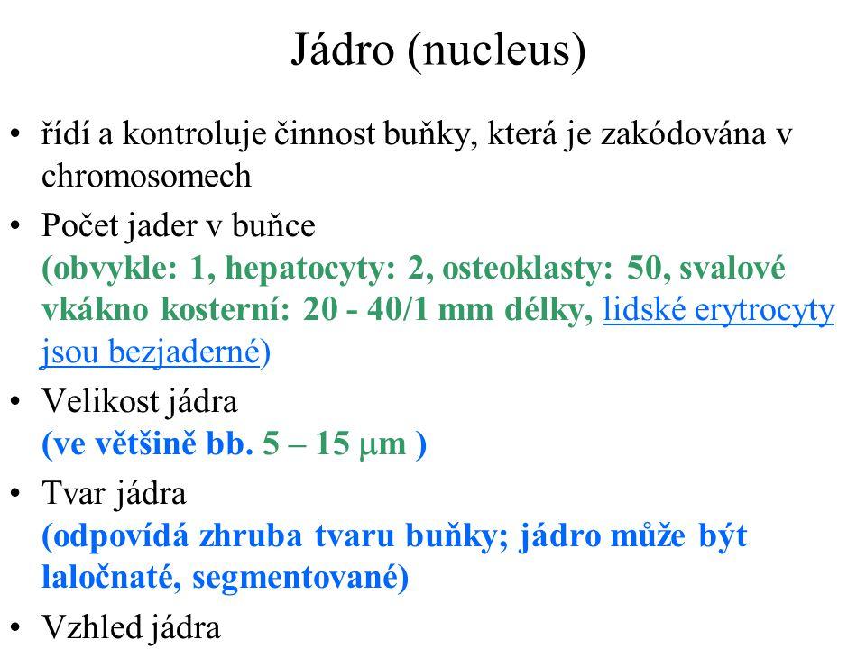 Jádro (nucleus) řídí a kontroluje činnost buňky, která je zakódována v chromosomech.