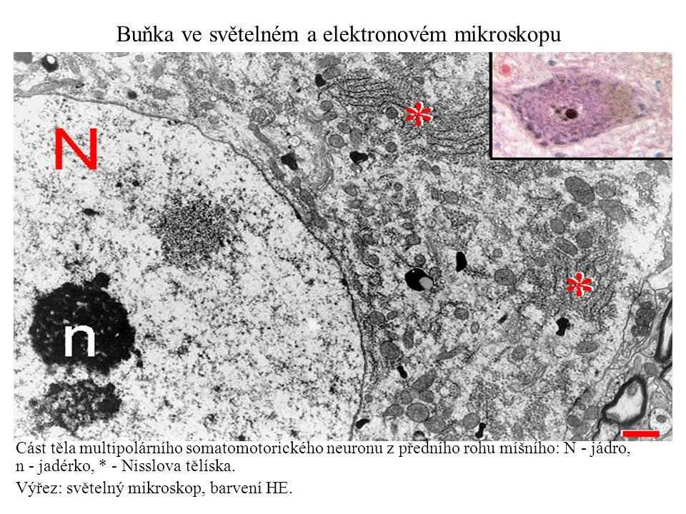 Buňka ve světelném a elektronovém mikroskopu