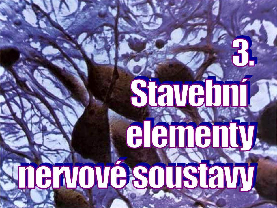 3. Stavební elementy nervové soustavy