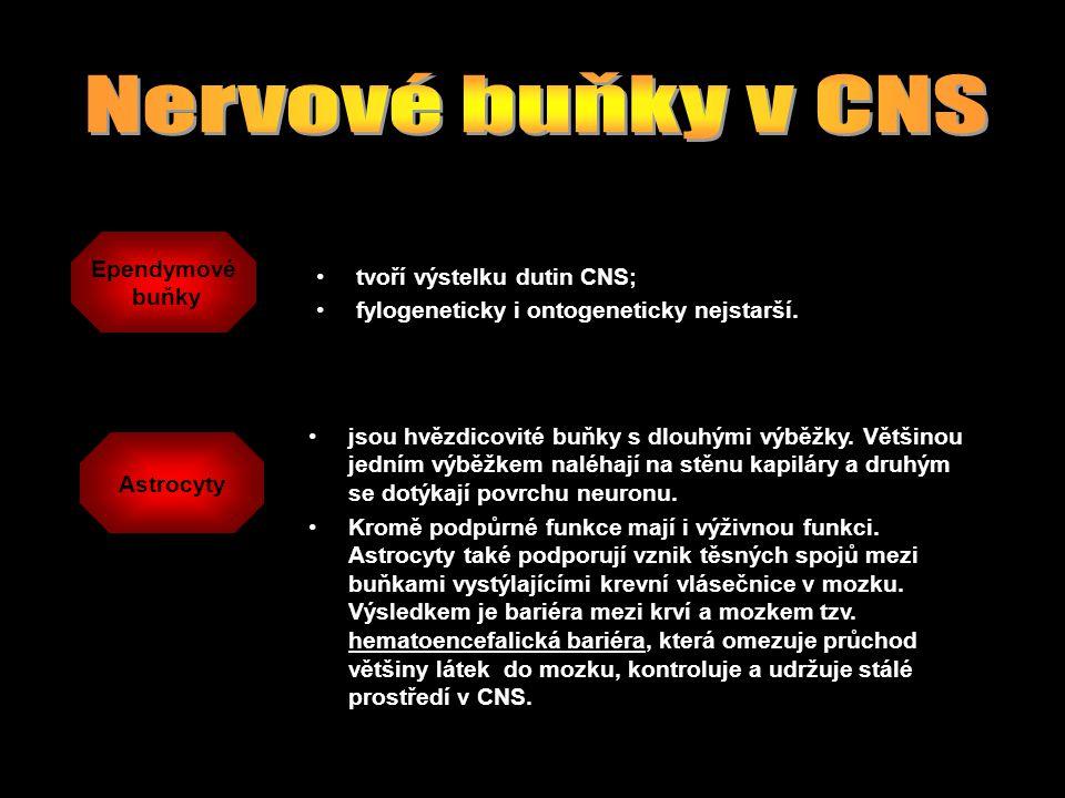 Nervové buňky v CNS Ependymové buňky tvoří výstelku dutin CNS;