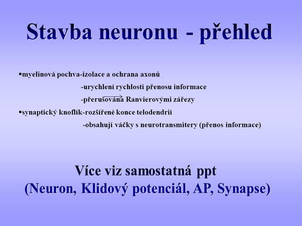 Stavba neuronu - přehled
