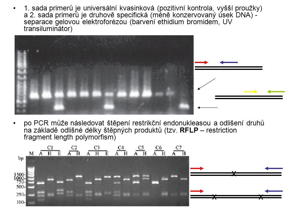 1. sada primerů je universální kvasinková (pozitivní kontrola, vyšší proužky) a 2. sada primerů je druhově specifická (méně konzervovaný úsek DNA) - separace gelovou elektroforézou (barvení ethidium bromidem, UV transiluminátor)