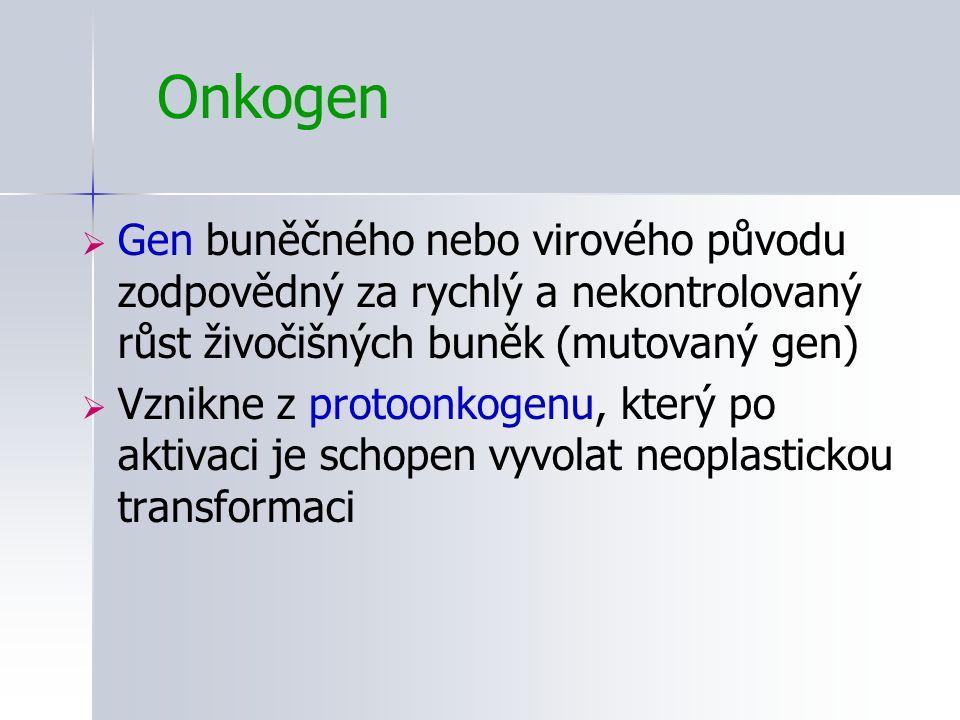 Onkogen Gen buněčného nebo virového původu zodpovědný za rychlý a nekontrolovaný růst živočišných buněk (mutovaný gen)