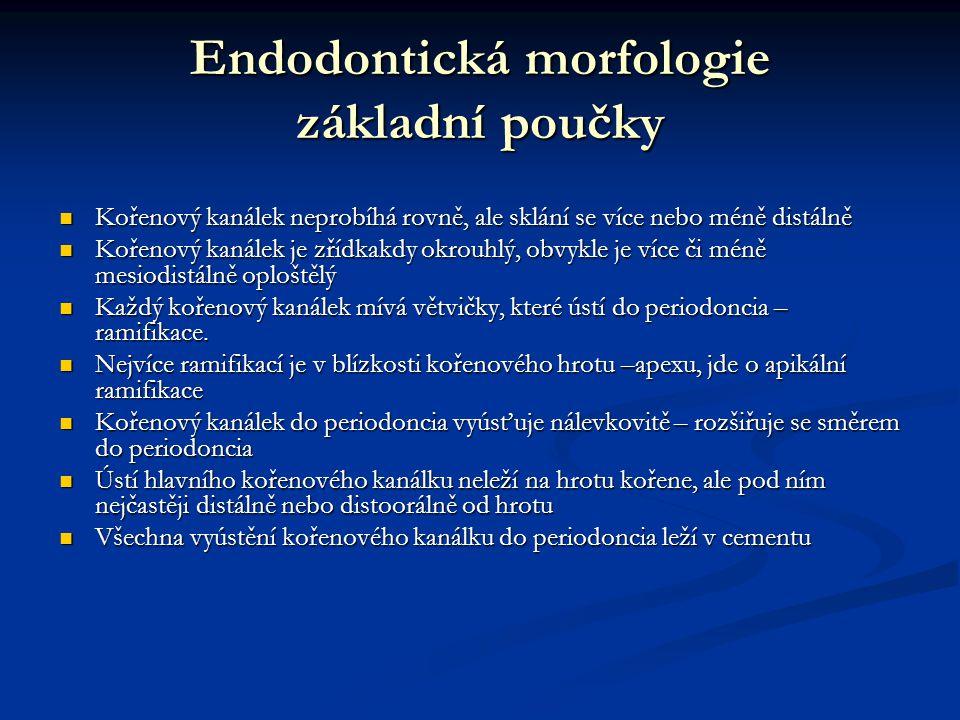 Endodontická morfologie základní poučky