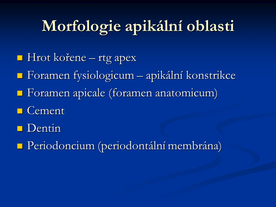 Morfologie apikální oblasti