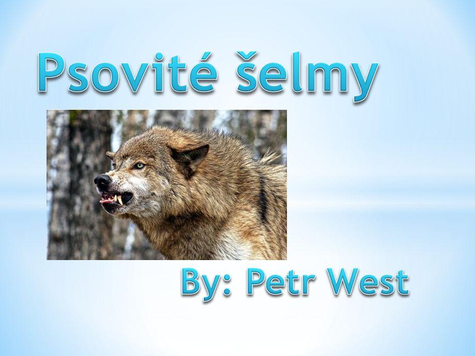 Psovité šelmy By: Petr West