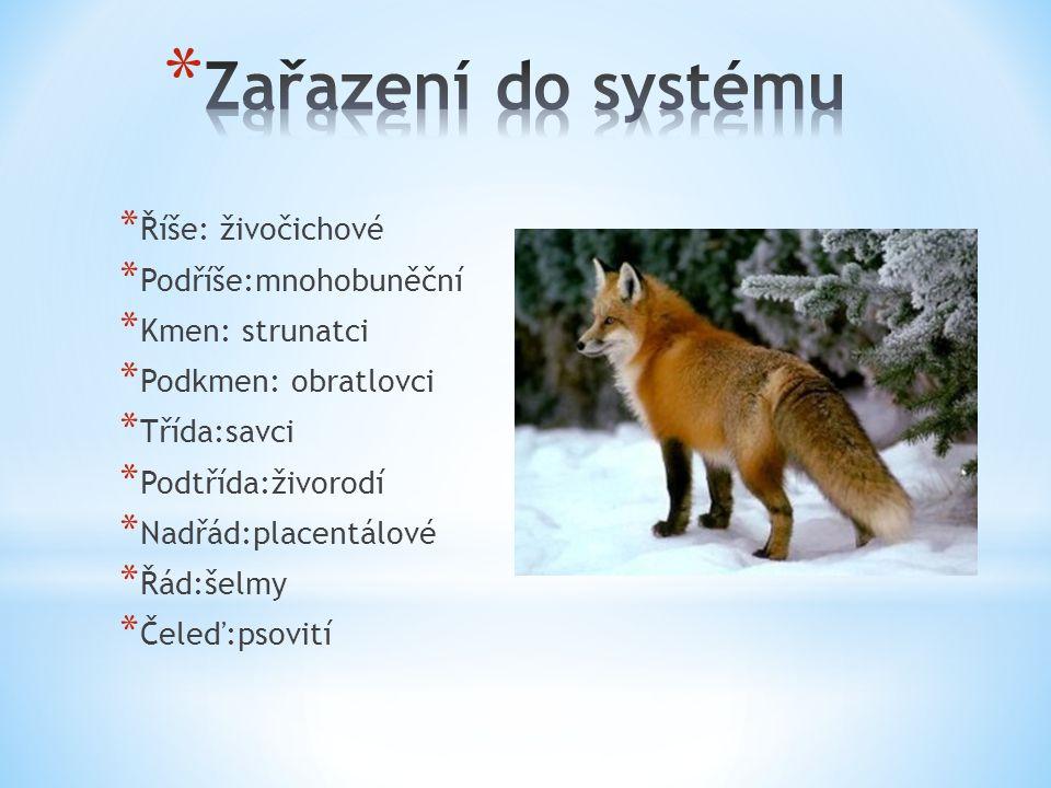 Zařazení do systému Říše: živočichové Podříše:mnohobuněční
