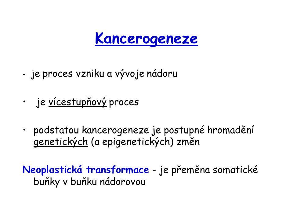Kancerogeneze - je proces vzniku a vývoje nádoru