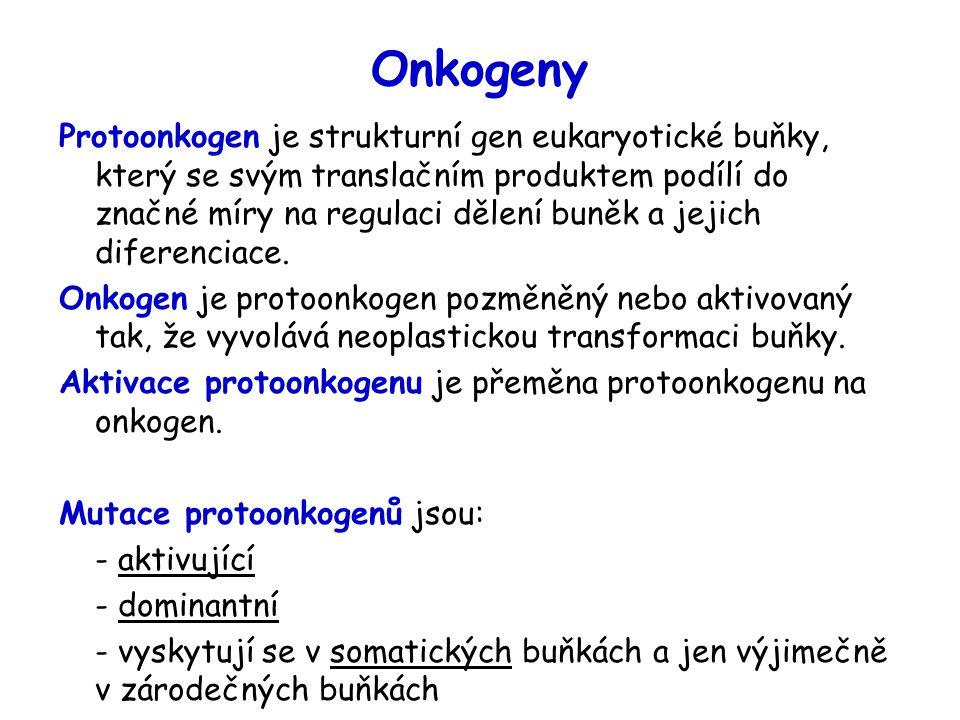 Onkogeny