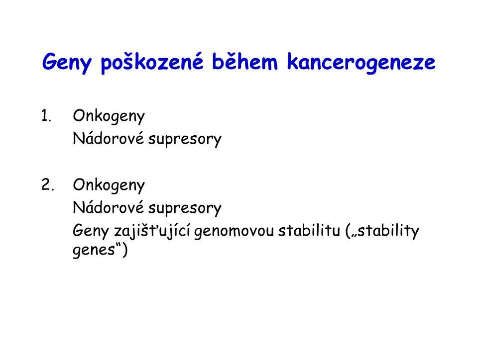 Geny poškozené během kancerogeneze