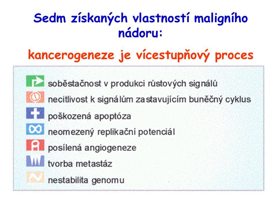Sedm získaných vlastností maligního nádoru: