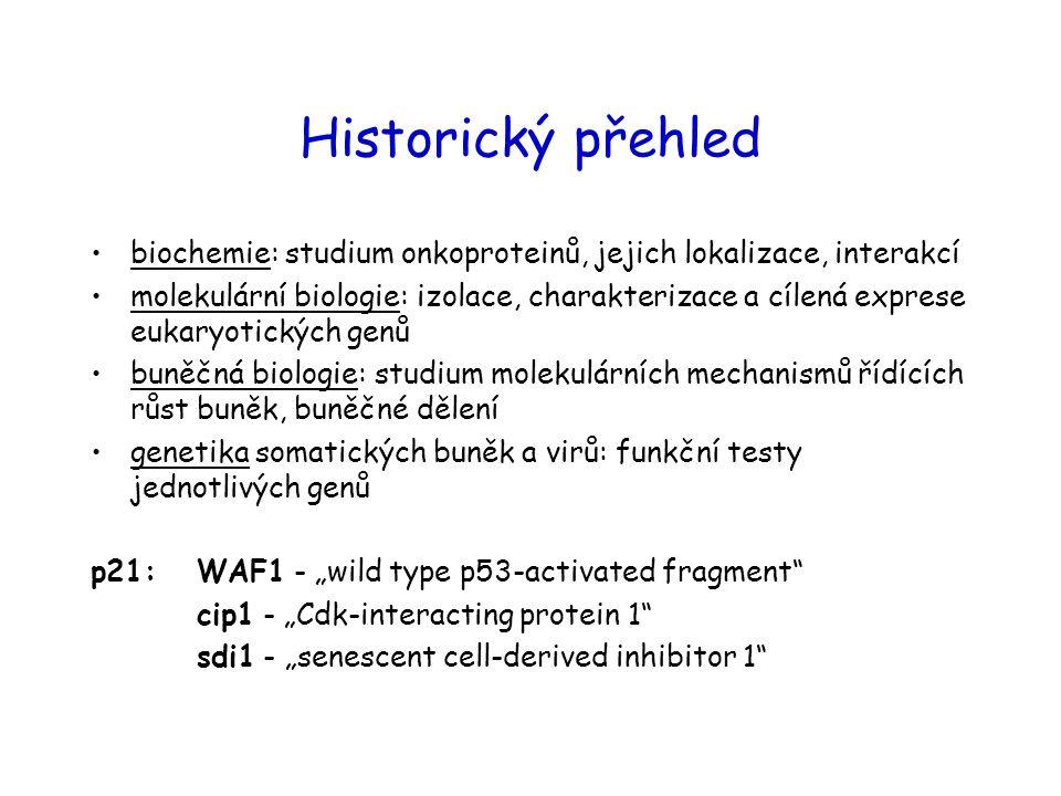 Historický přehled biochemie: studium onkoproteinů, jejich lokalizace, interakcí.