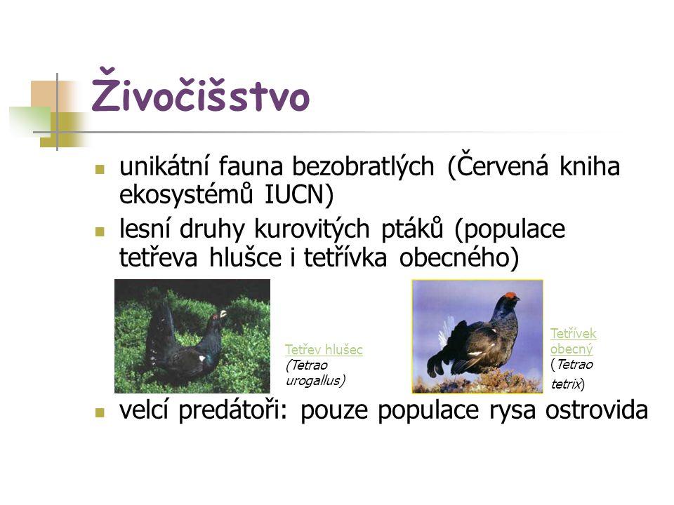 Živočišstvo unikátní fauna bezobratlých (Červená kniha ekosystémů IUCN) lesní druhy kurovitých ptáků (populace tetřeva hlušce i tetřívka obecného)