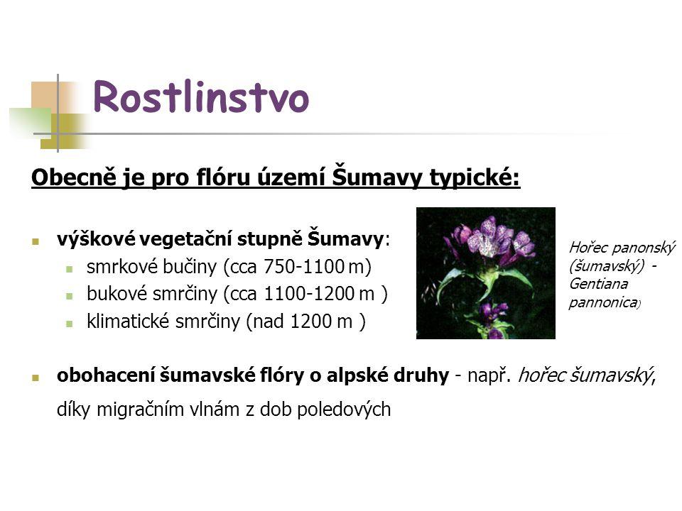 Rostlinstvo Obecně je pro flóru území Šumavy typické: