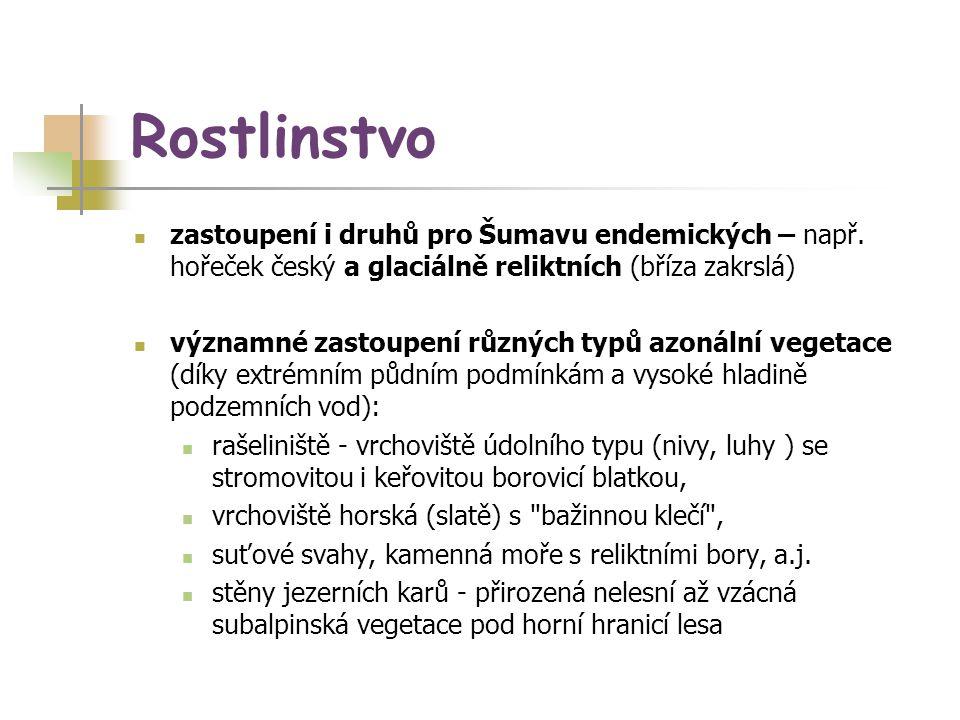 Rostlinstvo zastoupení i druhů pro Šumavu endemických – např. hořeček český a glaciálně reliktních (bříza zakrslá)