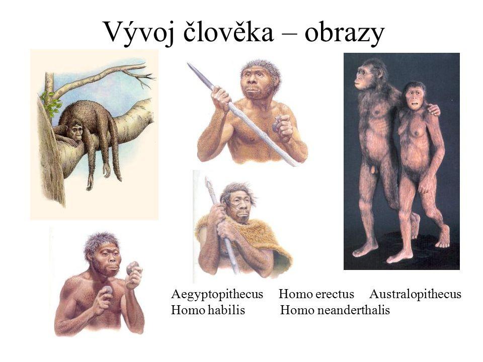 Vývoj člověka – obrazy Aegyptopithecus Homo erectus Australopithecus