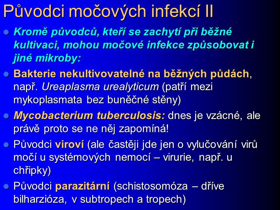 Původci močových infekcí II