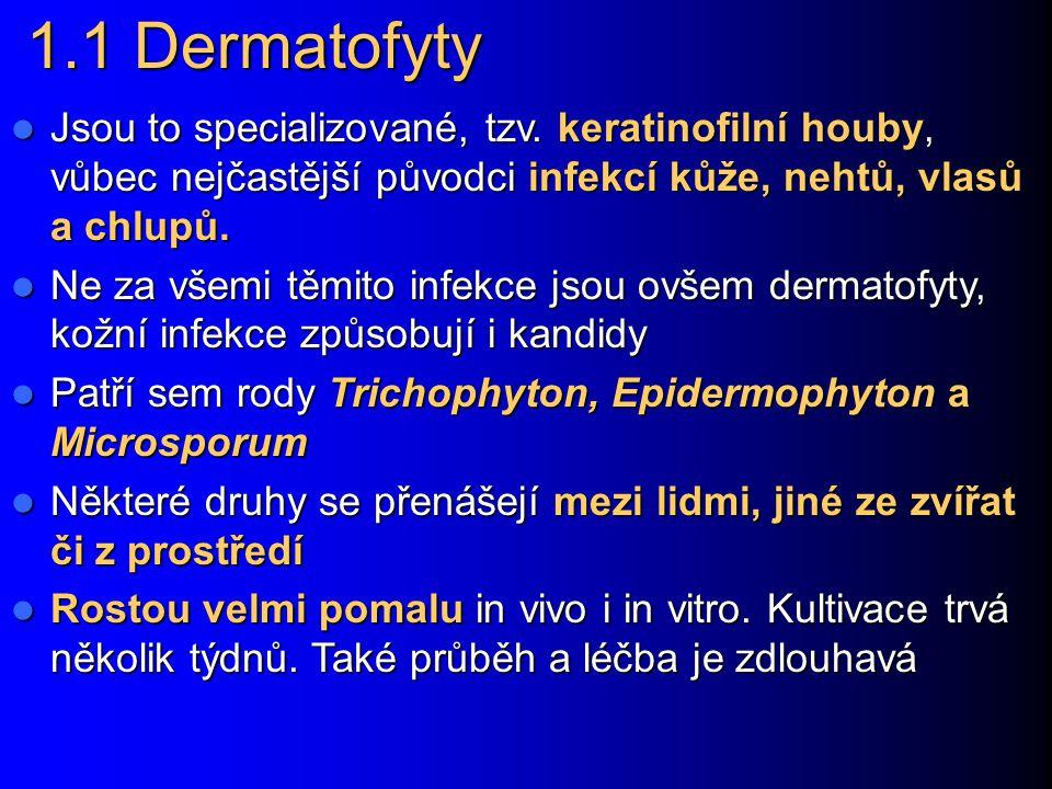1.1 Dermatofyty Jsou to specializované, tzv. keratinofilní houby, vůbec nejčastější původci infekcí kůže, nehtů, vlasů a chlupů.