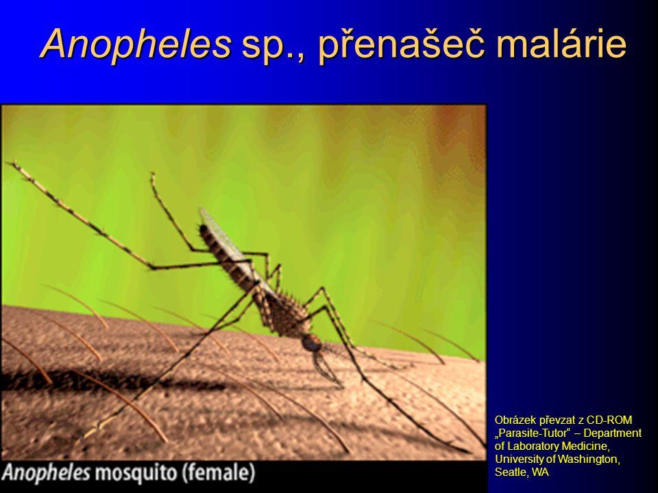 Anopheles sp., přenašeč malárie