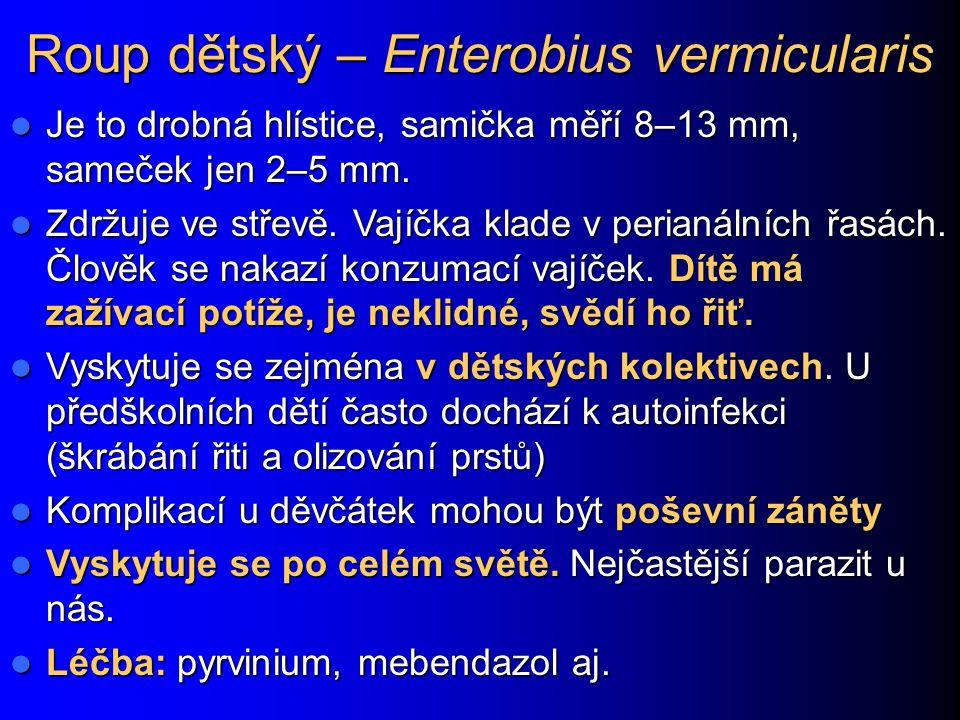 Roup dětský – Enterobius vermicularis