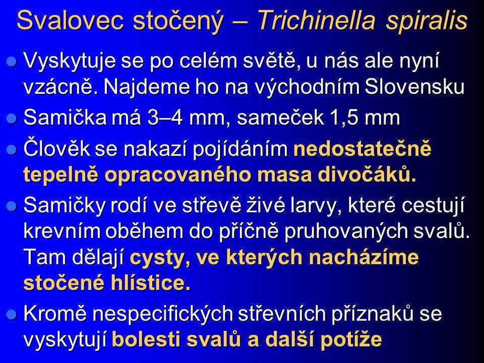 Svalovec stočený – Trichinella spiralis