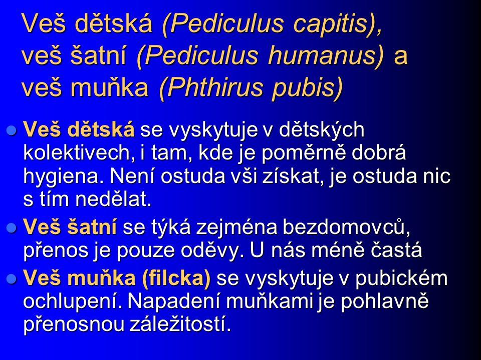 Veš dětská (Pediculus capitis), veš šatní (Pediculus humanus) a veš muňka (Phthirus pubis)