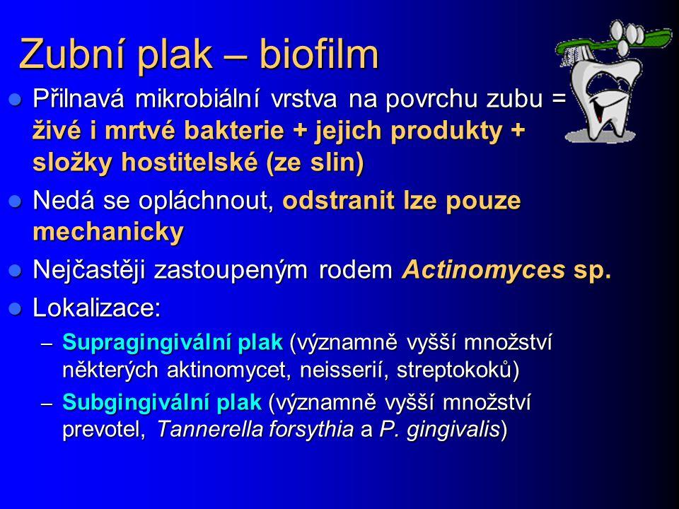 Zubní plak – biofilm Přilnavá mikrobiální vrstva na povrchu zubu = živé i mrtvé bakterie + jejich produkty + složky hostitelské (ze slin)