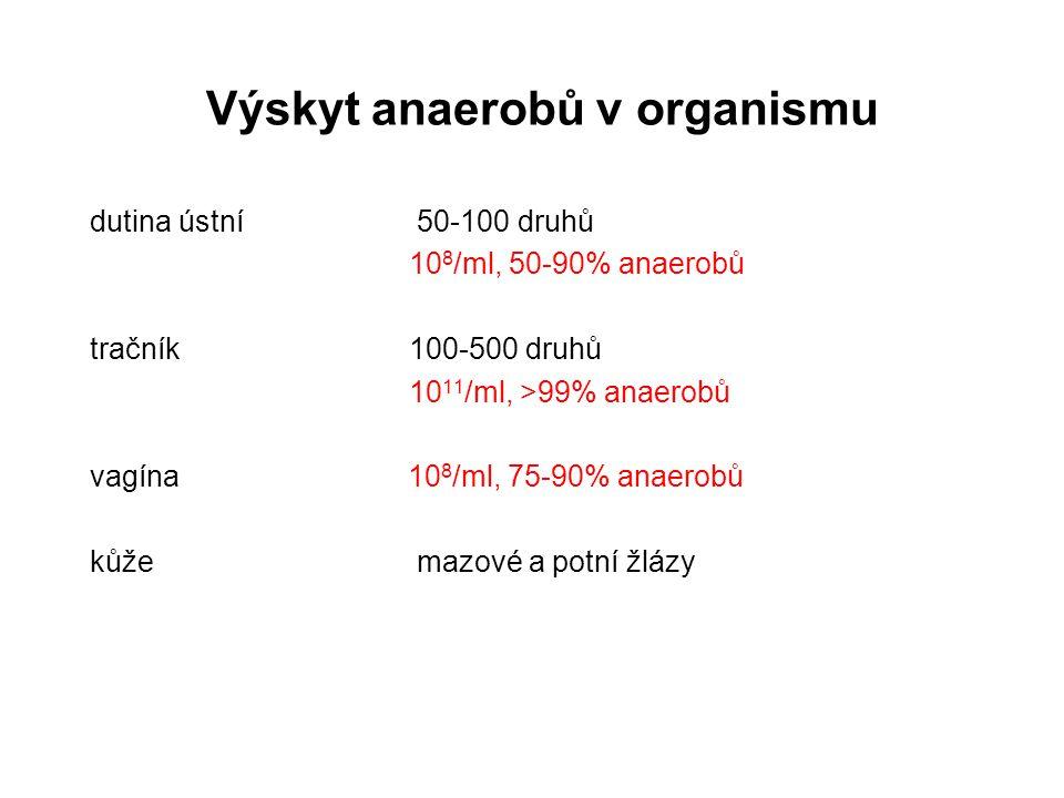 Výskyt anaerobů v organismu