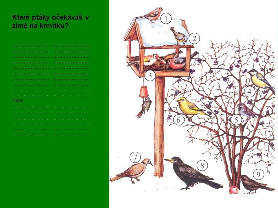 Které ptáky očekáváš v zimě na krmítku