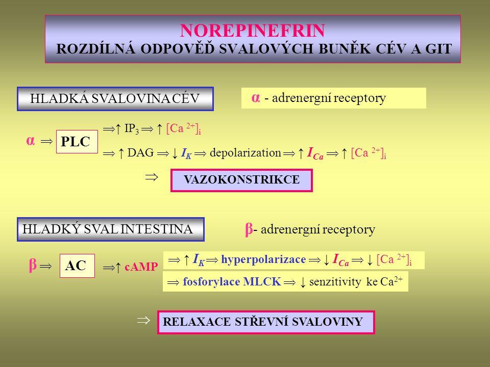 NOREPINEFRIN ROZDÍLNÁ ODPOVĚĎ SVALOVÝCH BUNĚK CÉV A GIT