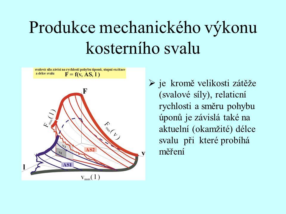 Produkce mechanického výkonu kosterního svalu