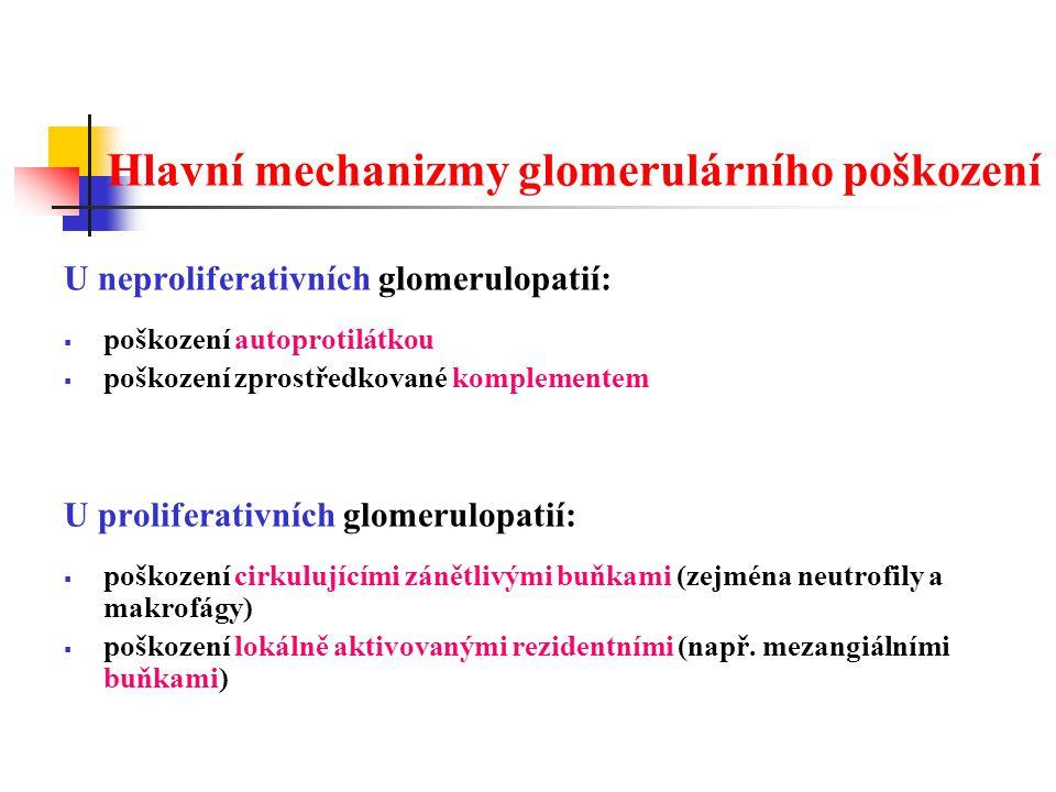 Hlavní mechanizmy glomerulárního poškození