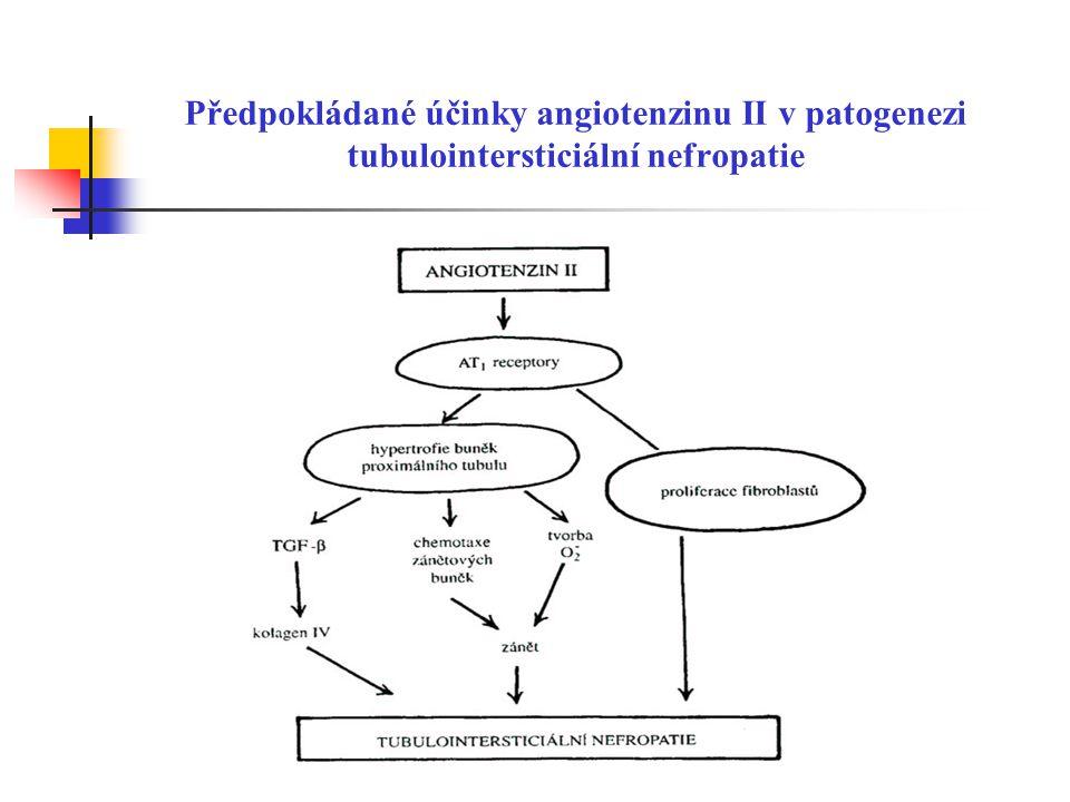 Předpokládané účinky angiotenzinu II v patogenezi tubulointersticiální nefropatie