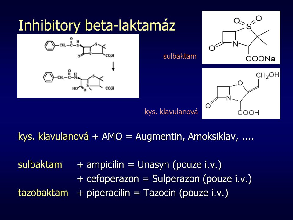 Inhibitory beta-laktamáz