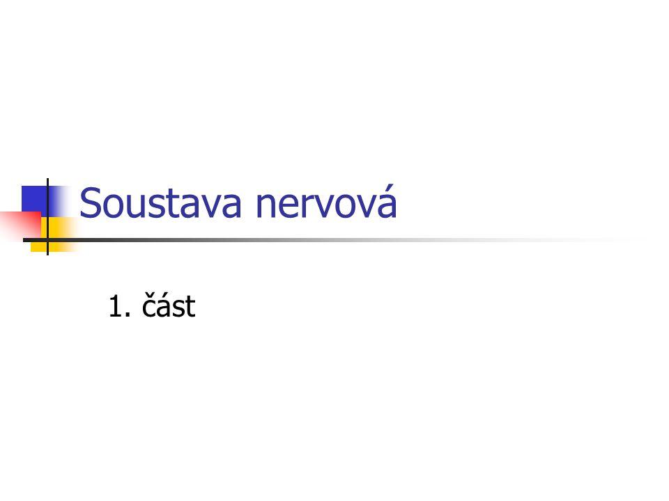 Soustava nervová 1. část