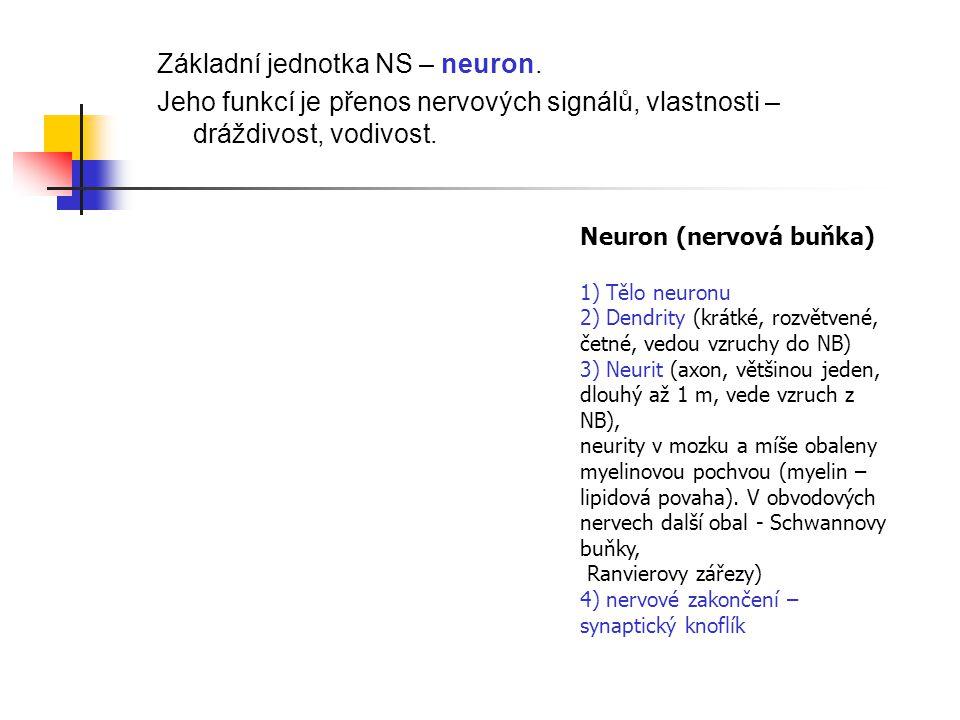 Základní jednotka NS – neuron.