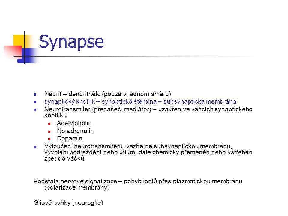 Synapse Neurit – dendrit/tělo (pouze v jednom směru)