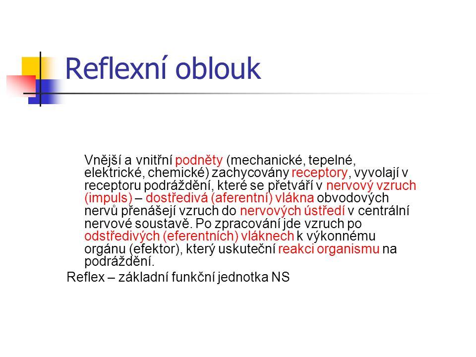 Reflexní oblouk