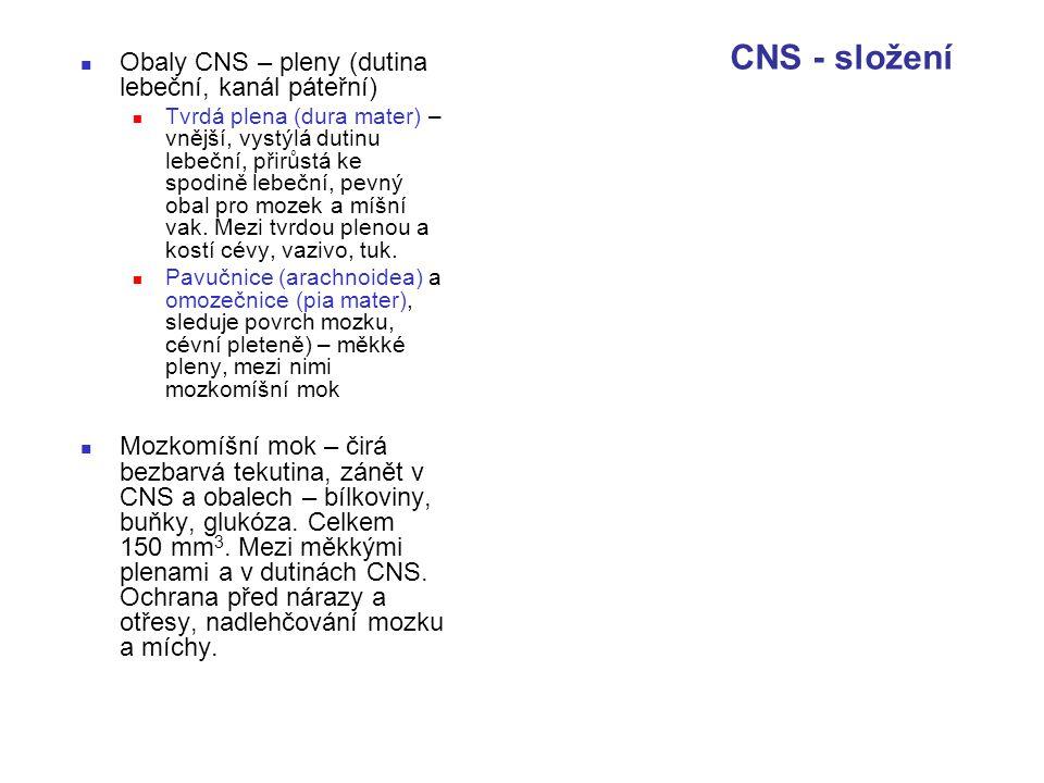 CNS - složení Obaly CNS – pleny (dutina lebeční, kanál páteřní)