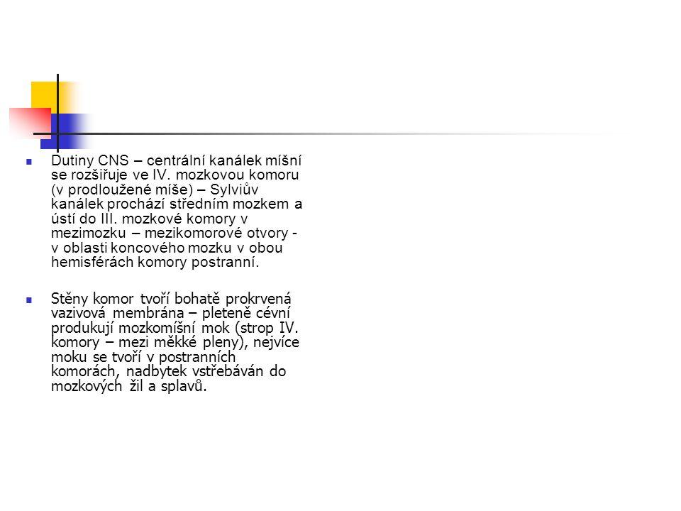 Dutiny CNS – centrální kanálek míšní se rozšiřuje ve IV
