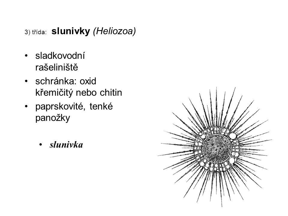 3) třída: slunivky (Heliozoa)