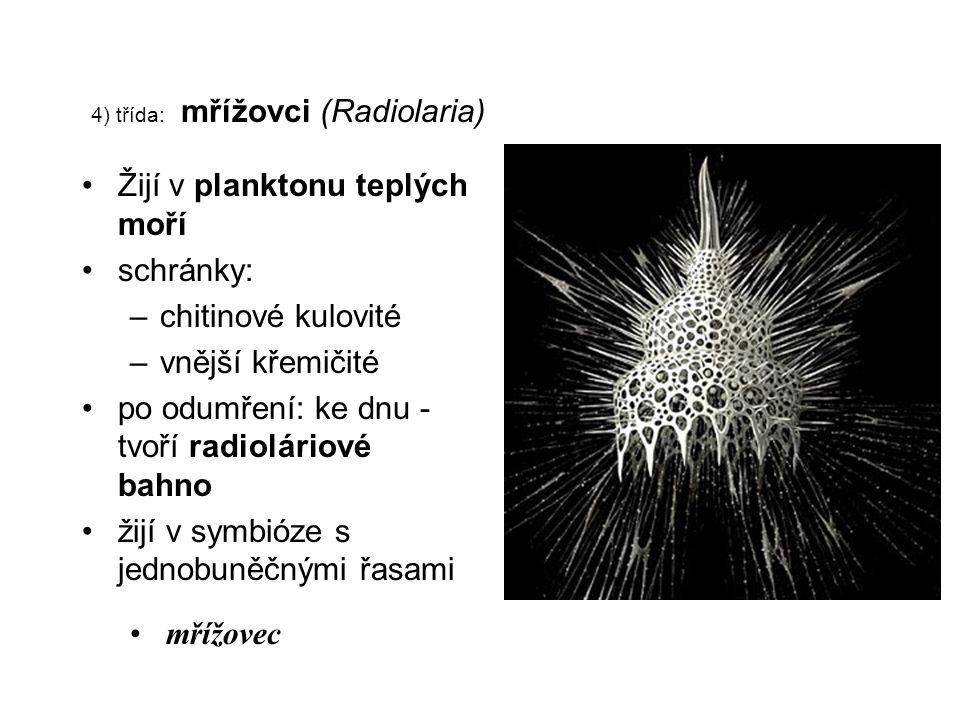 4) třída: mřížovci (Radiolaria)