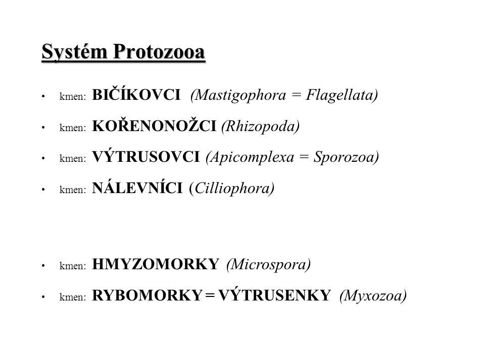 Systém Protozooa kmen: BIČÍKOVCI (Mastigophora = Flagellata)