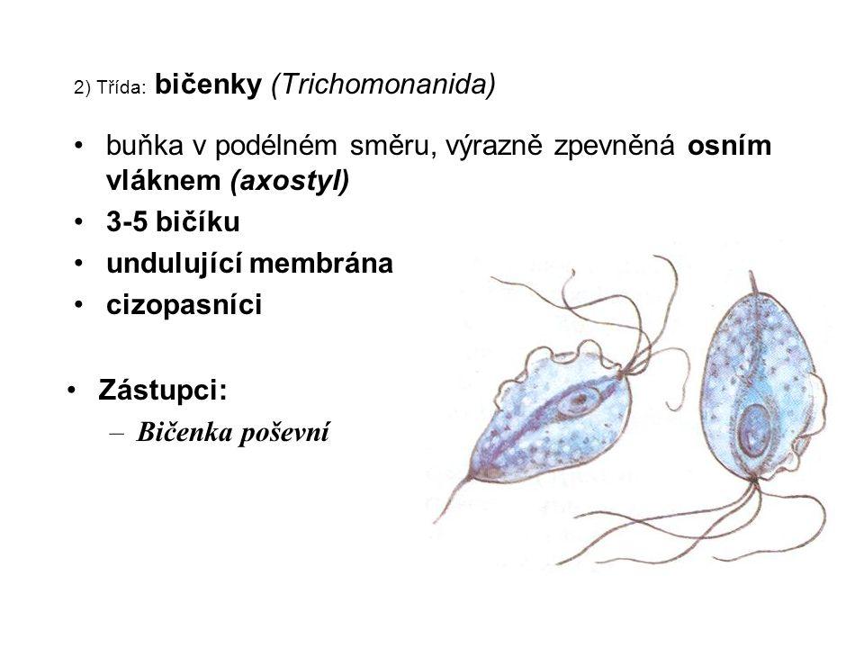 2) Třída: bičenky (Trichomonanida)