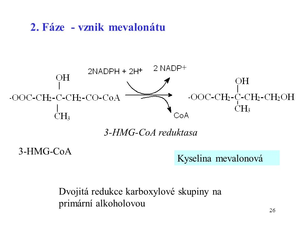 2. Fáze - vznik mevalonátu