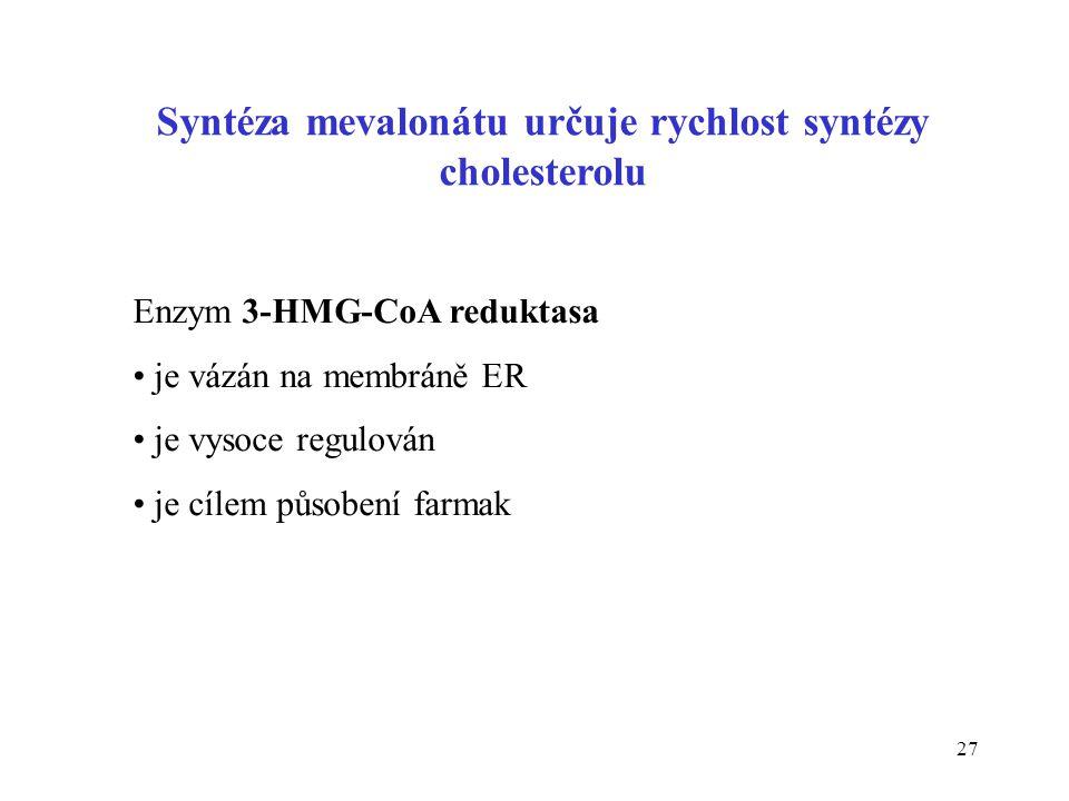 Syntéza mevalonátu určuje rychlost syntézy cholesterolu