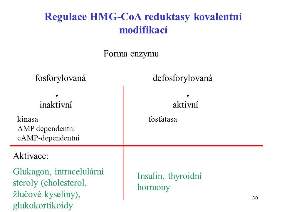 Regulace HMG-CoA reduktasy kovalentní modifikací