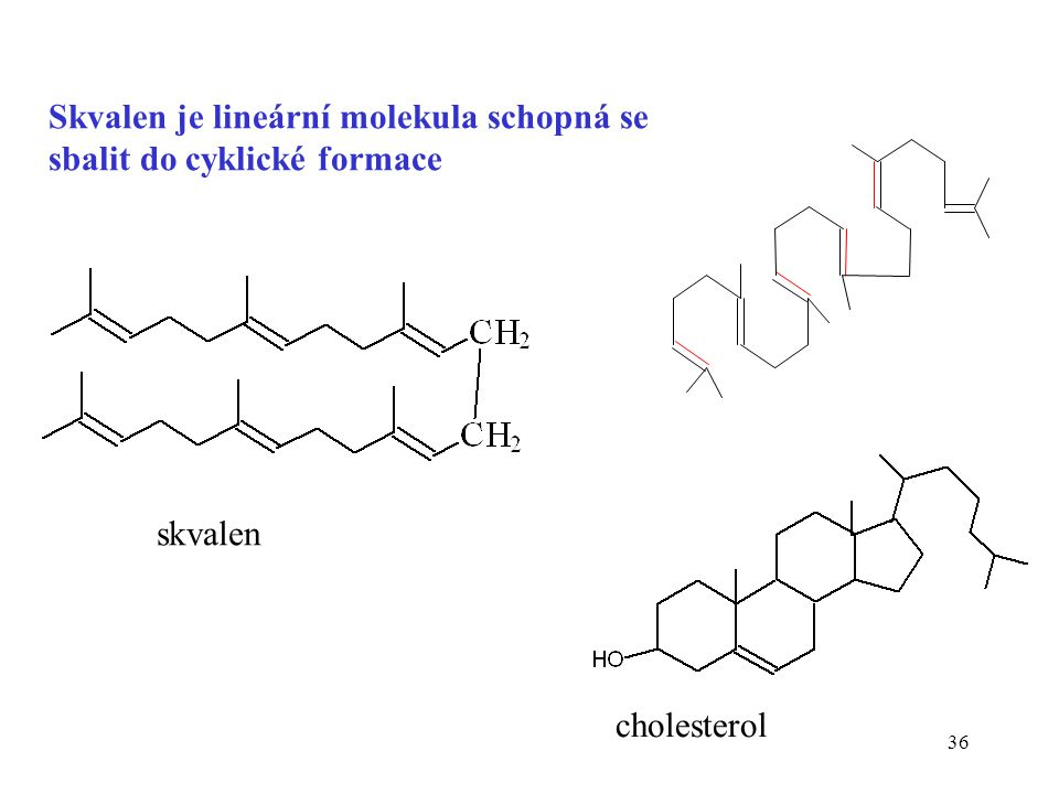 Skvalen je lineární molekula schopná se sbalit do cyklické formace