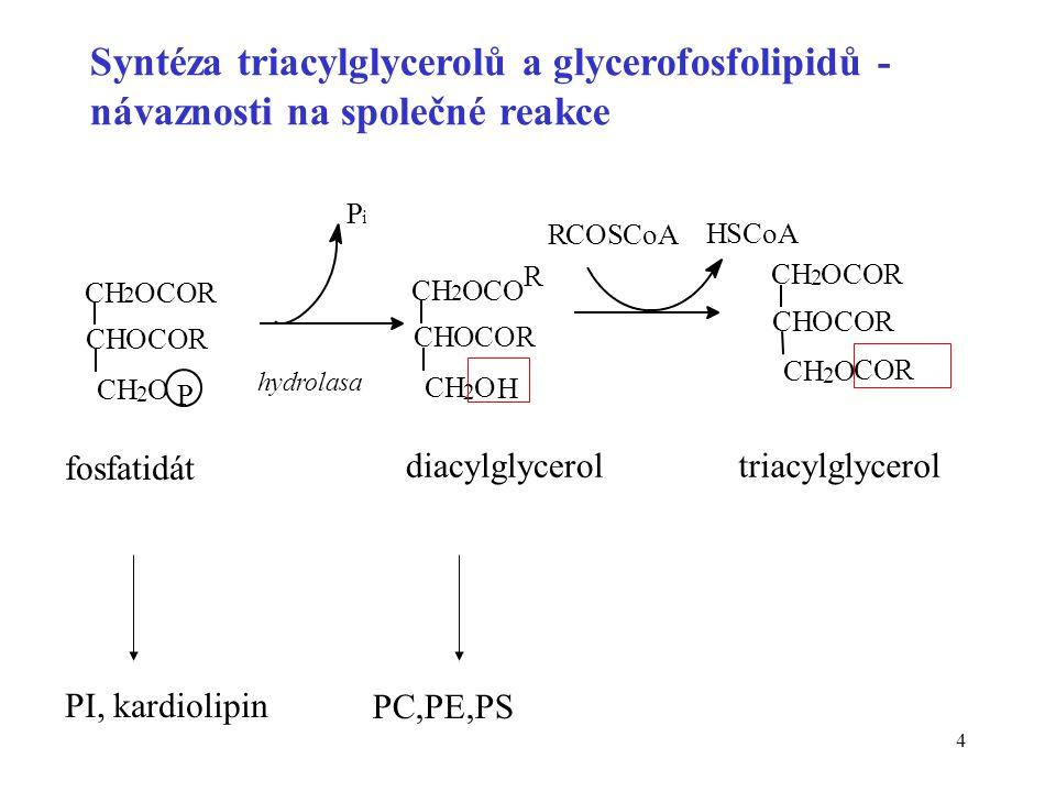 Syntéza triacylglycerolů a glycerofosfolipidů - návaznosti na společné reakce